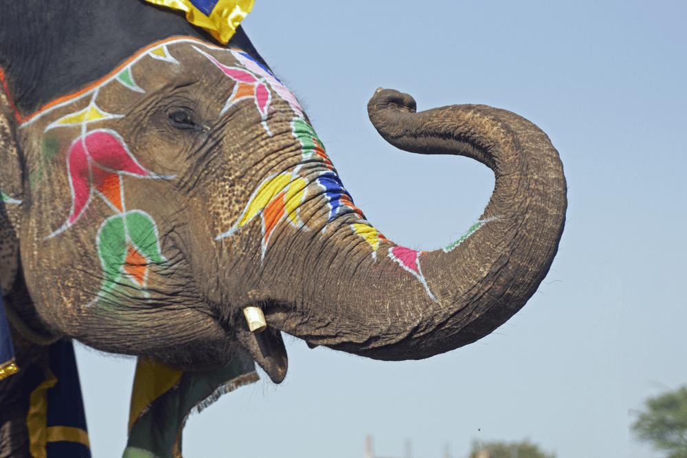 Elephant Festival 2019