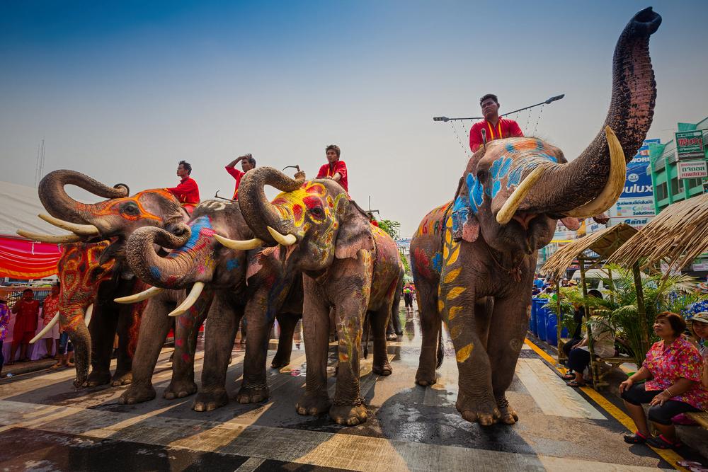 dancing with elephants on elephant festival 2019