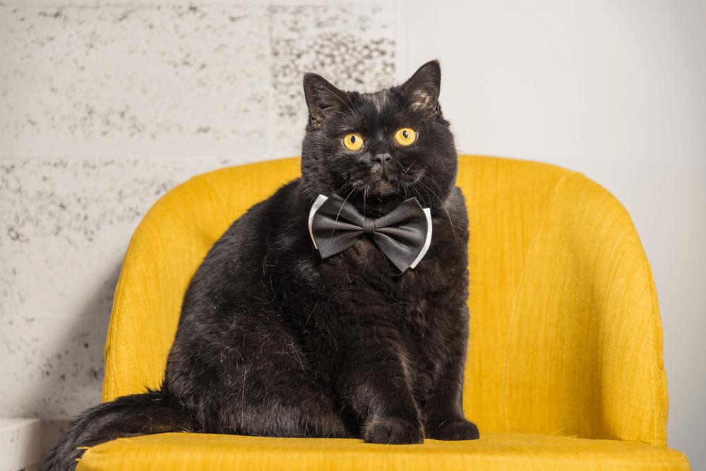 appreciating black cat day