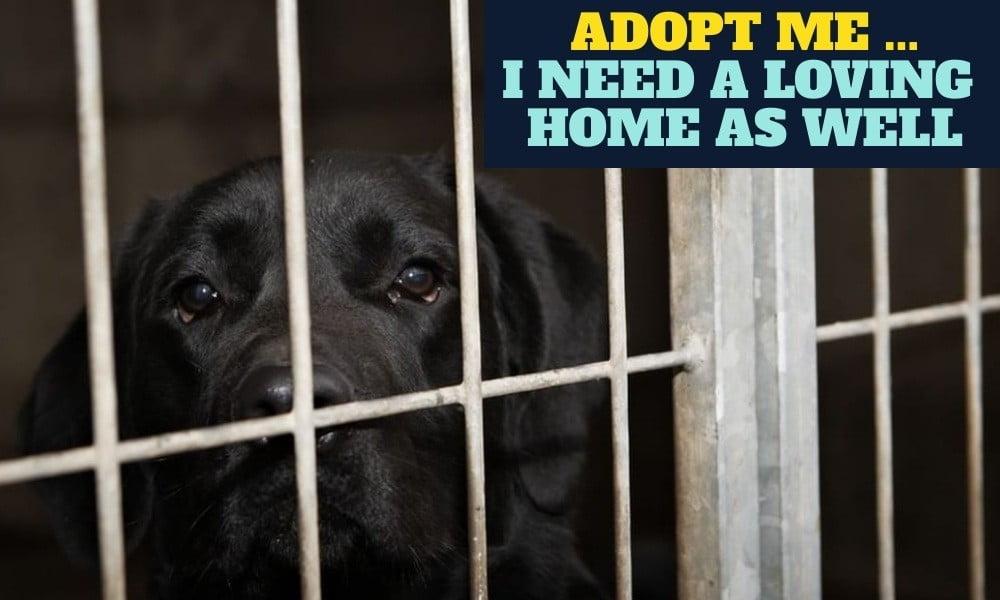 Adopt Me Black Dog