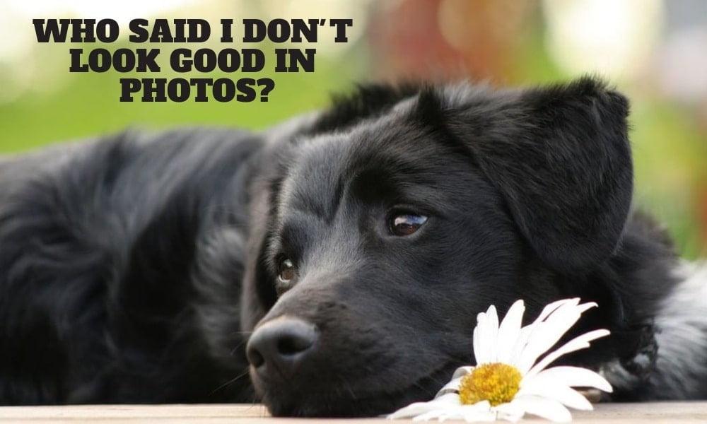 Black Dog Awareness Day