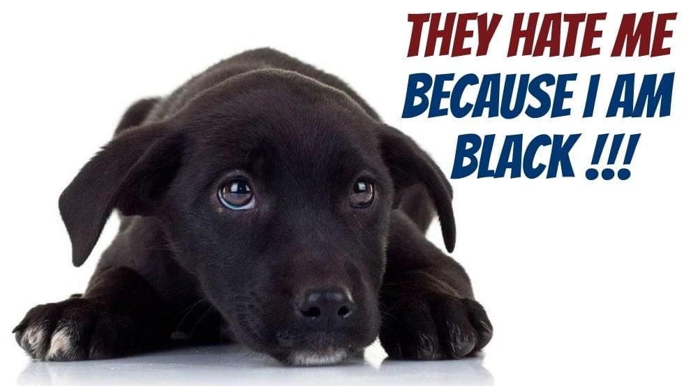 Black Dog Day October 1