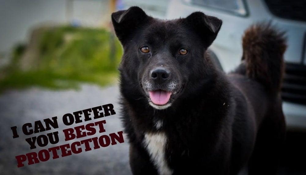 Nation Black Dog Appreciation Day